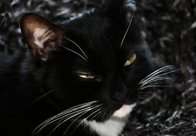 Photograph - Sleepy Kitty by Andrew Mcdermott