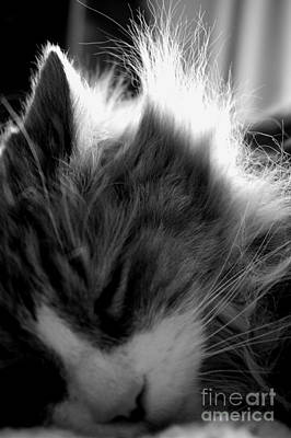 Photograph - Sleepy Kitty by Mary-Lee Sanders