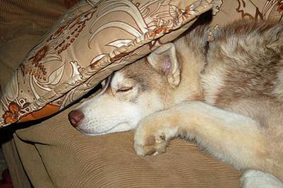 Photograph - Sleepy by Lynda Hoffman-Snodgrass
