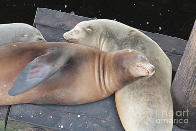 Sleepy Sea Lions Art Print