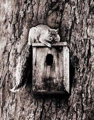 Photograph - Sleepy Squirrel by Danielle R T Haney