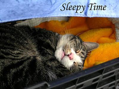 Photograph - Sleepy Time by Douglas Barnett