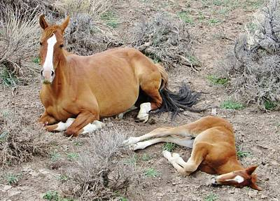 Photograph - Sleepy Time  Mustang by Marilyn Diaz