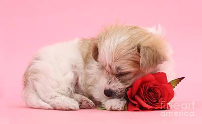 Photograph - Sleepy Valentine by Warren Photographic