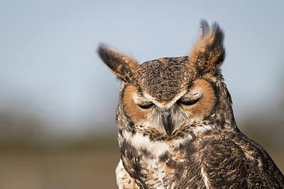 Photograph - Sleepyhead by Dawn Currie