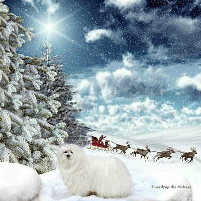 Maltese Dog Christmas Cards Wall Art - Mixed Media - Sleigh Bells Ringing by Morag Bates