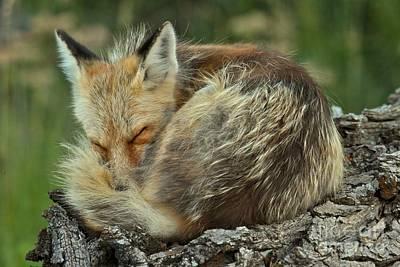 Photograph - Slept Like A Log by Adam Jewell