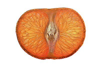 Photograph - Slice Of A Mandarin Orange by  Onyonet  Photo Studios