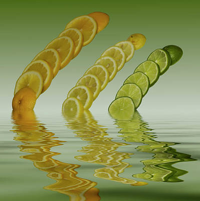 Slices  Grapefruit Lemon Lime Citrus Fruit Art Print