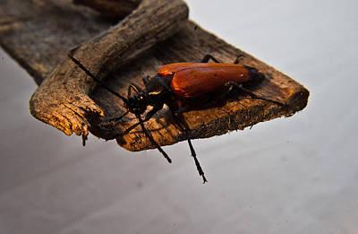Pause Photograph - Sliding Beetle by Douglas Barnett