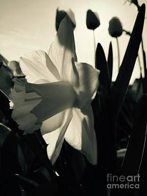 Photograph - Slim Shady by Trish Hale