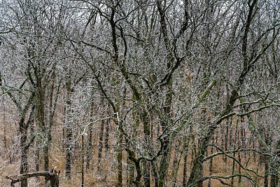 Photograph - Slippery Day For Squirrels by Randy Scherkenbach