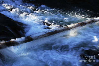 Photograph - Slippery Log by Gary Wing