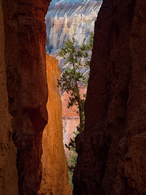 Photograph - Sliver Of Bryce by Emily Dickey