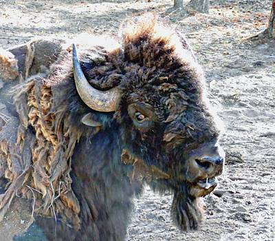 Photograph - Slobbering Buffalo by Joe Duket