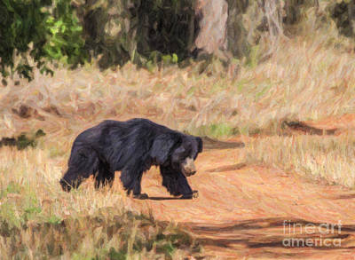 Digital Art - Sloth Bear Melursus Ursinus by Liz Leyden