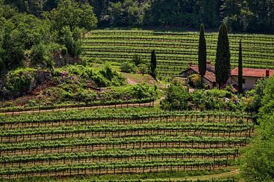 Photograph - Slovenian Vineyard by Stuart Litoff