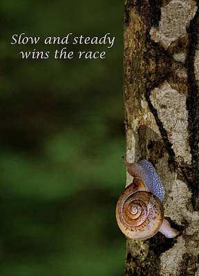Photograph - Slow And Steady - Snail by Nikolyn McDonald