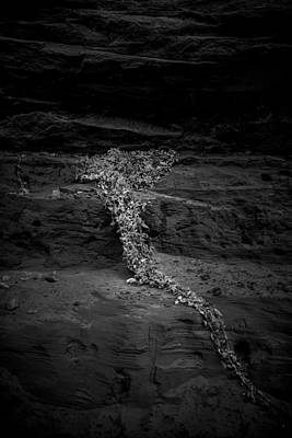 Vines Photograph - Slow Decent by Joseph Smith