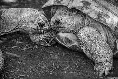 Slow Kiss Art Print by Jamie Pham