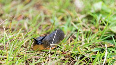 Photograph - Slug In The Grass In Dorset A England by Jacek Wojnarowski