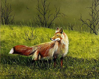Sly Fox Art Print by Don Griffiths