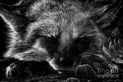 Wall Art - Drawing - Sly Fox by Laurie Musser