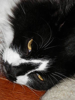 Cats Photograph - Sly Kitty by Diane DiMarco