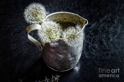 Photograph - Small Antique Tin Pitcher Of Dandelion Puffs by Kathleen K Parker