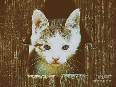 Small Baby Kitty Cat Portrait Art Print