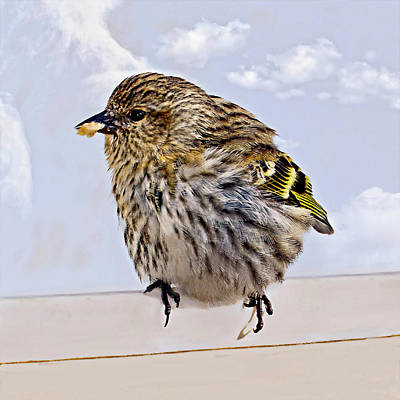 Photograph - Small Bird Eating Seed by Susan Leggett
