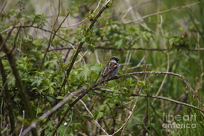 Photograph - Small Bird On Branch by Donna L Munro