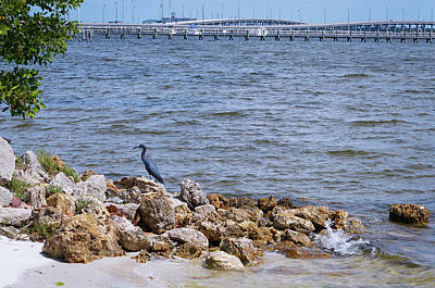 Rock Photograph - Small Blue Heron by Ric Schafer