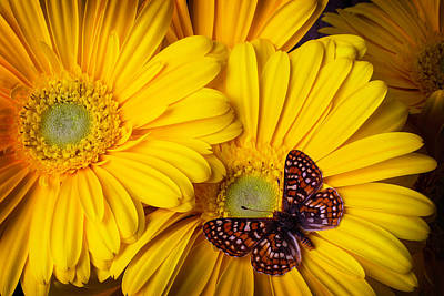 Gerbera Daisy Photograph - Small Brown Butterfly by Garry Gay