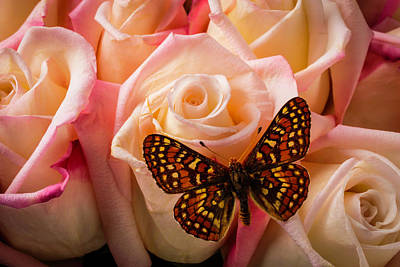 Small Butterfly On Pink Roses Art Print by Garry Gay