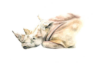 Rhinocerus Painting - Small Colour Rhino by Elizabeth Lock