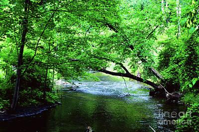 Photograph - Small Creek by Gary Wonning