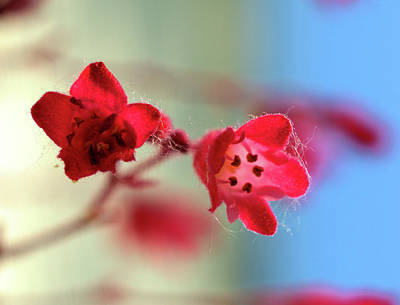 Photograph - Small Flower by Charles HALL