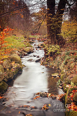 Photograph - Small Forest Stream by Sophie McAulay