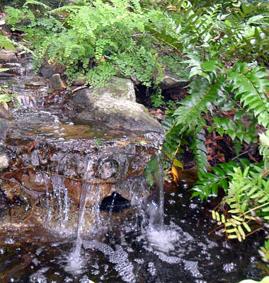Photograph - Small Garden Waterfall by Sheri McLeroy