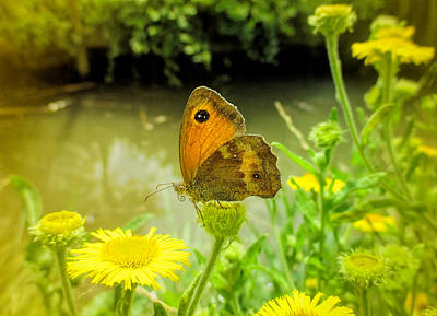 Photograph - Small Heath Butterfly by Valerie Anne Kelly