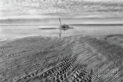 Photograph - Small Island On The Outer Banks Bw by Dan Carmichael