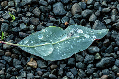 Photograph - Small Leaf With Raindrops by Belinda Greb