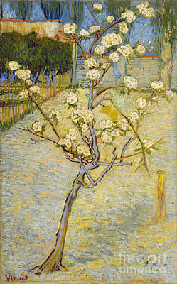Pear Tree Painting - Small Pear Tree In Blossom by Van Gogh