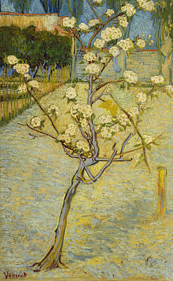 Pear Tree Painting - Small Pear Tree In Blossom by Vincent van Gogh