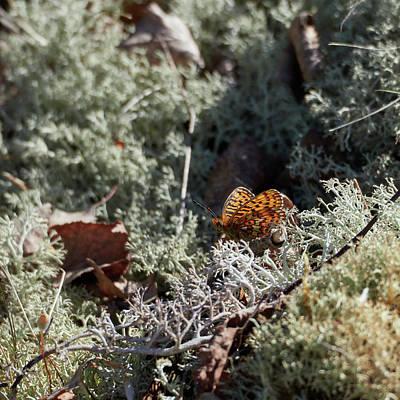Photograph - Small Pearl-bordered Fritillary by Jouko Lehto