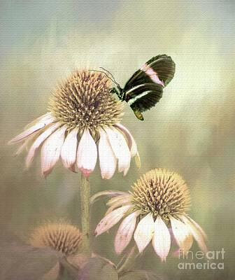 Photograph - Small Postman Butterfly On Cone Flower by Janette Boyd