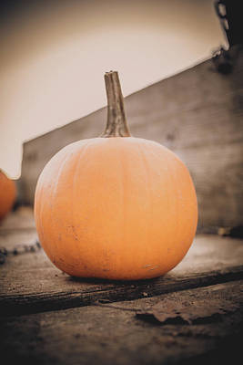 Photograph - Small Pumpkin by Jeanette Fellows