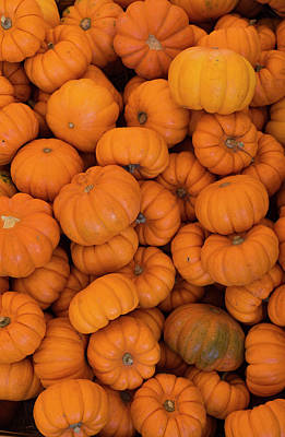 Photograph - Small Pumpkins by Dennis Reagan