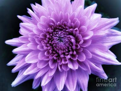 Photograph - Small Purple Flower by Joan-Violet Stretch